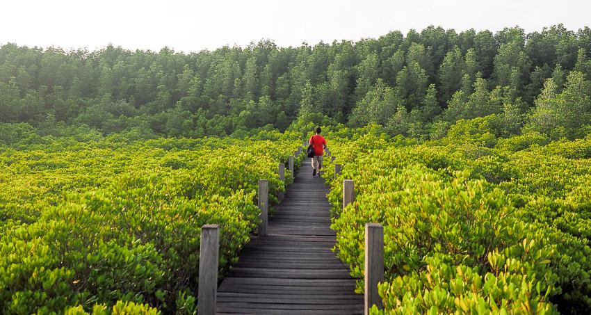 golden mangrove rayong