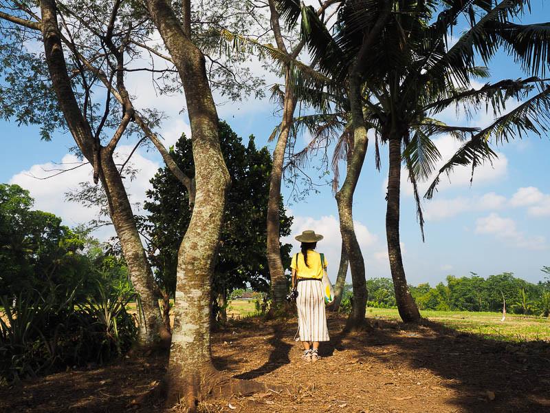 Desa nyambu tabanan bali