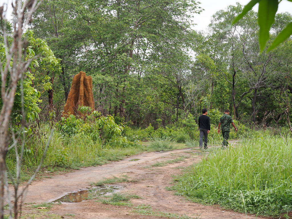 Hutan sekitar Sota