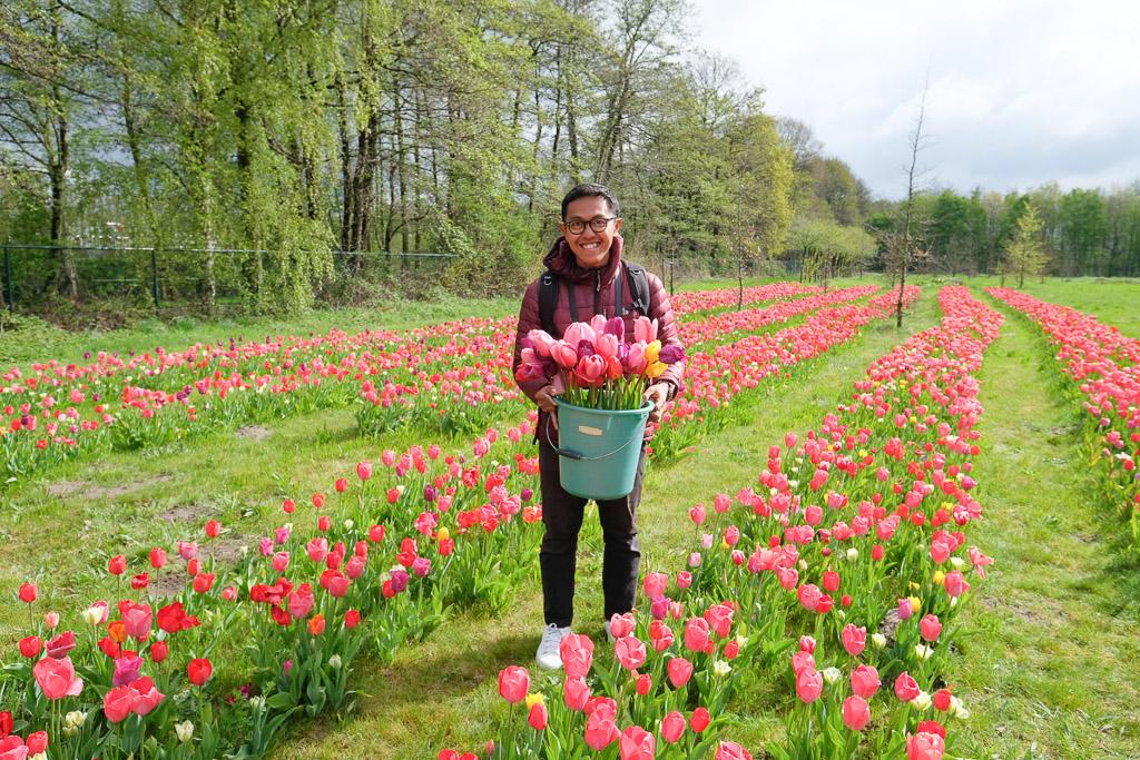 Petik Bunga Tulip Sepuasnya Di Antwerp Wira Nurmansyah